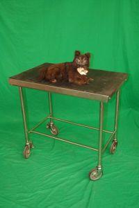 Veterinary Examination Table With Stuffed Dog Veterinary