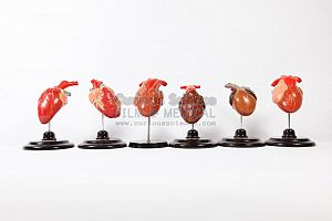 Period Heart Models