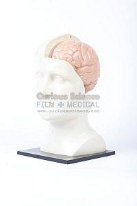 Teaching Model of Brain