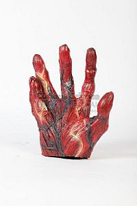 Flayed model of human hand