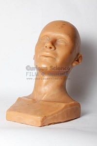 Model of male head
