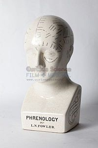 Phrenology model of head