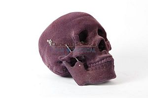 Velvet covered skull