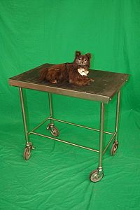 Veterinary Examination Table with Stuffed Dog