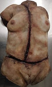 Synthetic Female Torso
