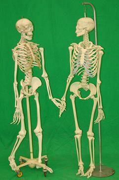 Medical Teaching Skeletons