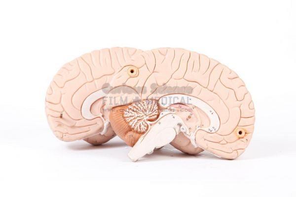 Teaching Model of Brain