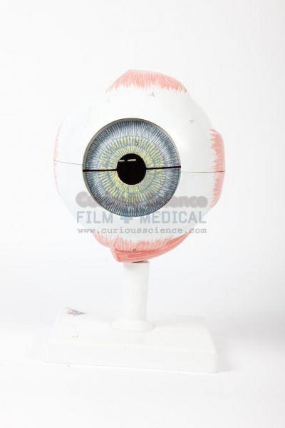 Model of human eye