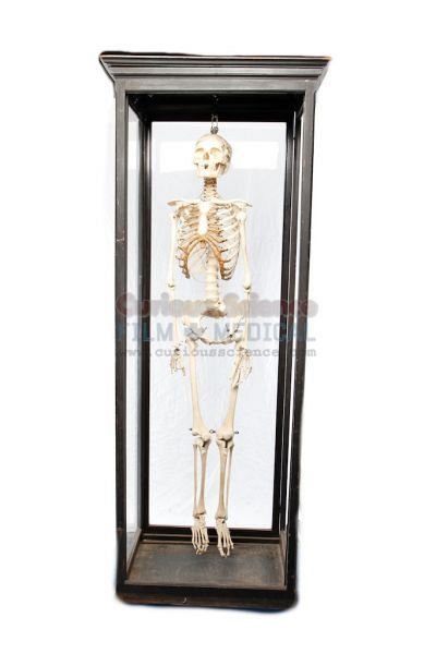 Period Skeleton in Cabinet